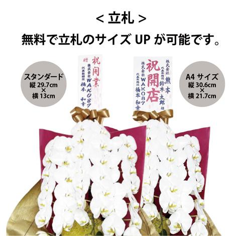 胡蝶蘭 5本立ちイメージ