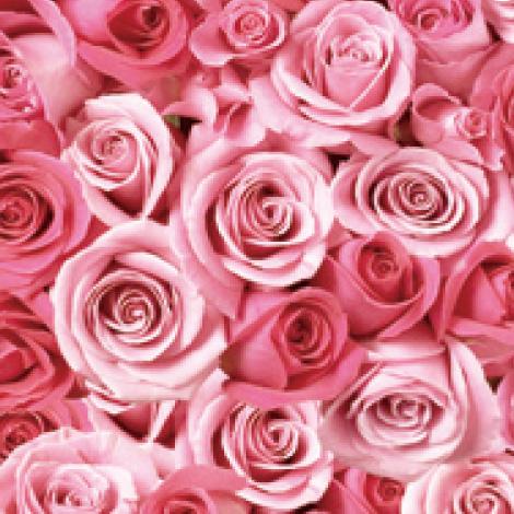 【R-01】100本特別割引 4色から選ぶバラの花束(ピンク)