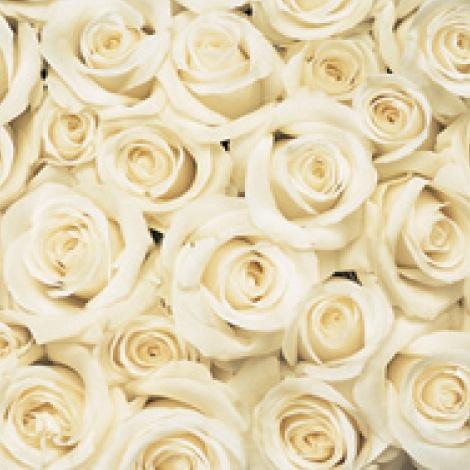 【R-01】100本特別割引 4色から選ぶバラの花束(WHITE)