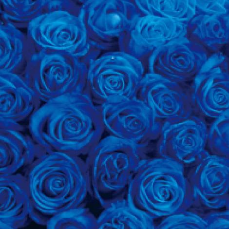 【R-04】100本特別割引 青バラの花束