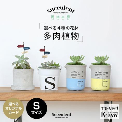 【SUC-01】多肉植物 選べる4種の花鉢 Sサイズ