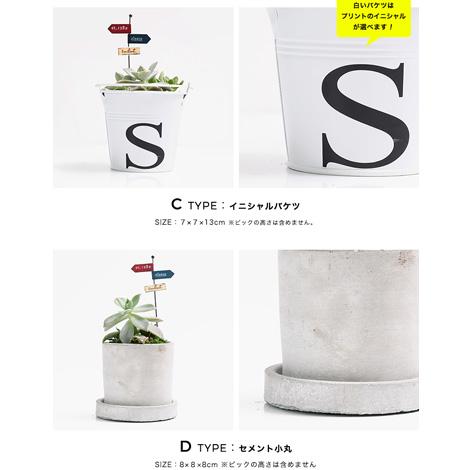 多肉植物 選べる4種の花鉢 Sサイズイメージ