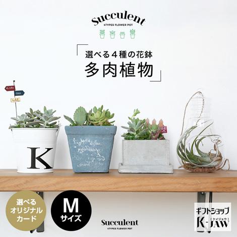 多肉植物 選べる4種の花鉢 Mサイズイメージ