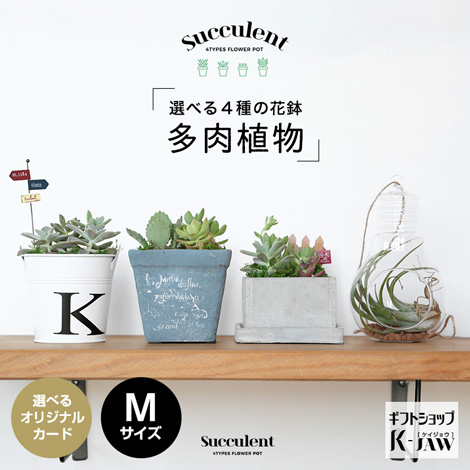 【SUC-02】多肉植物 選べる4種の花鉢 Mサイズ