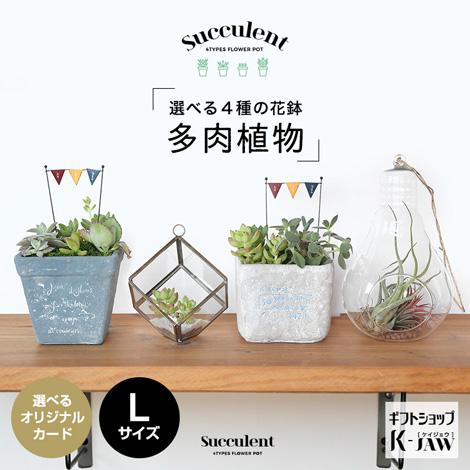 【SUC-03】多肉植物 選べる4種の花鉢 Lサイズ