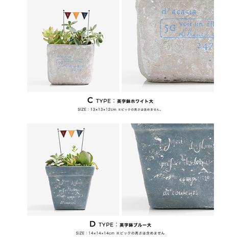 多肉植物 選べる4種の花鉢 Lサイズイメージ