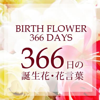 誕生花366日