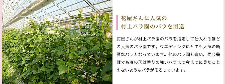 熊本阿蘇村上バラ園 花瓶付スプレーローズ 商品の特徴