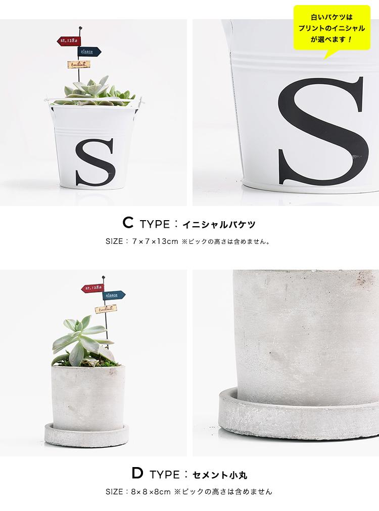 多肉植物 選べる4種の花鉢 Sサイズ 商品の特徴