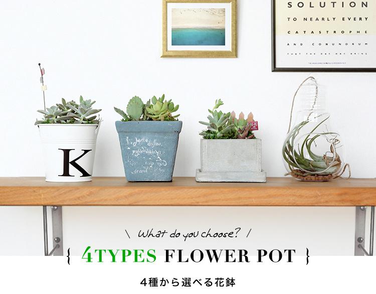 多肉植物 選べる4種の花鉢 Mサイズ 商品の特徴