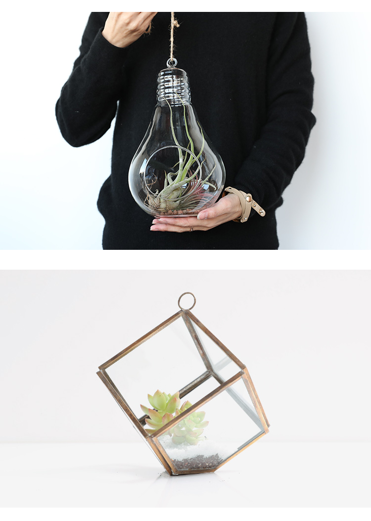 多肉植物 選べる4種の花鉢 Lサイズ 商品の特徴